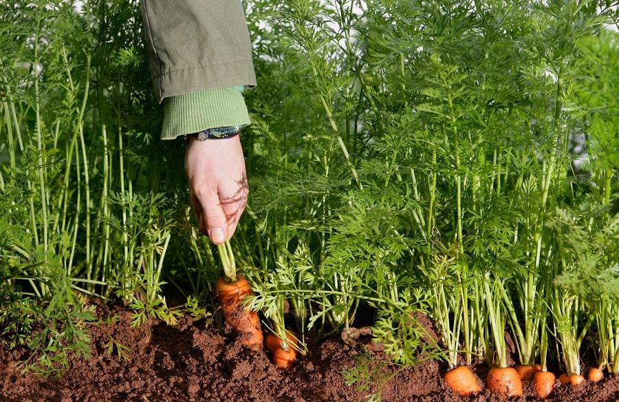 农产品溯源系统